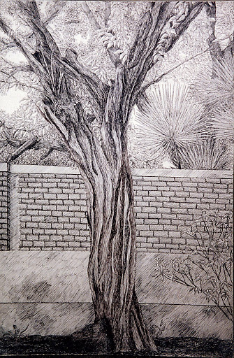 Pen and Ink: The Tree